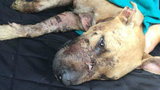 Dog dumped on road named 'Miracle'