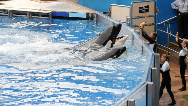 SeaWorld exec admits he did not tell the truth about 'Blackfish'