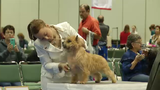 Dog show comes to Orange County