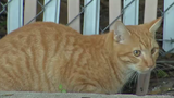 Osceola County receives grant to combat feral cat problem