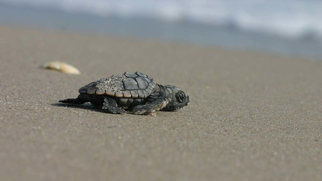 Here's how to protect eggs during Florida's sea turtle nesting season