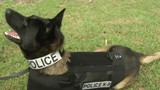 Ocala police K-9 Unit to receive new protective vests