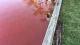 Heavy rain turns water red near Minutemen Causeway in Cocoa Beach