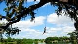 College Park's fallen landmark, The Jump Tree, inspires school project