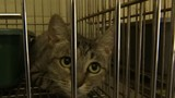 Marion County Animal Services to become no-kill animal facility