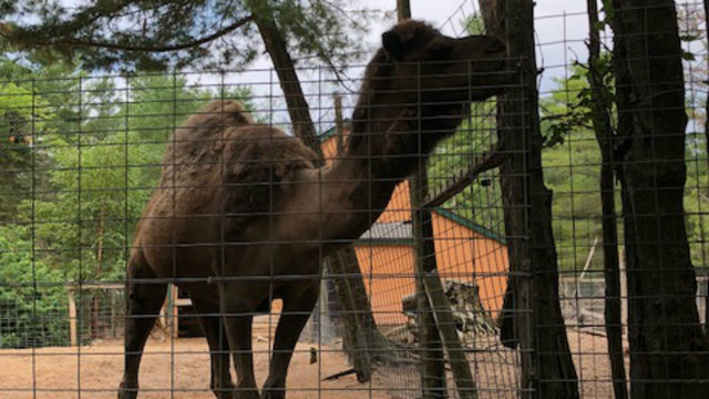 This zoo in middle-of-nowhere Michigan is unlike anything you've ever seen