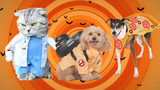 16 of the cutest-ever dog, cat costumes for Halloween