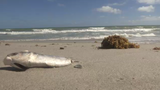 Red tide now present in Brevard, Indian River counties
