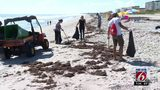 Volunteers help clean up after red tide hits Cocoa Beach