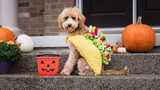 18 dogs who officially won Halloween