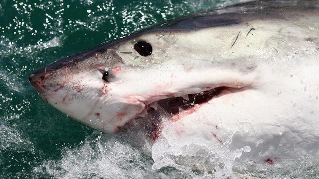 9-year-old girl bitten by shark at New Smyrna Beach