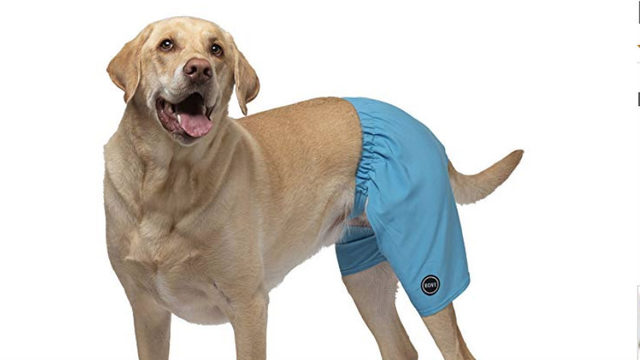 Doggy swim trunks and life jackets are hilariously perfect for summertime