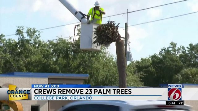 Crews remove 23 palm trees