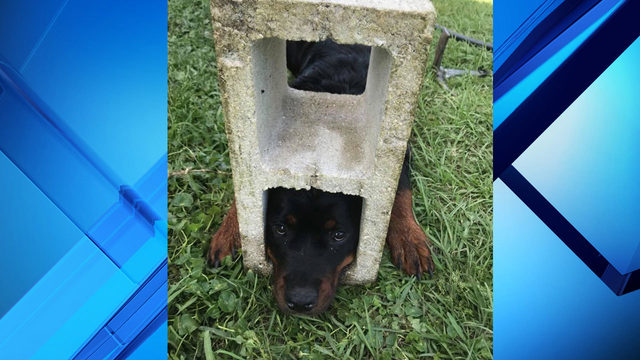 Florida firefighters rescue dog trapped in cinder block