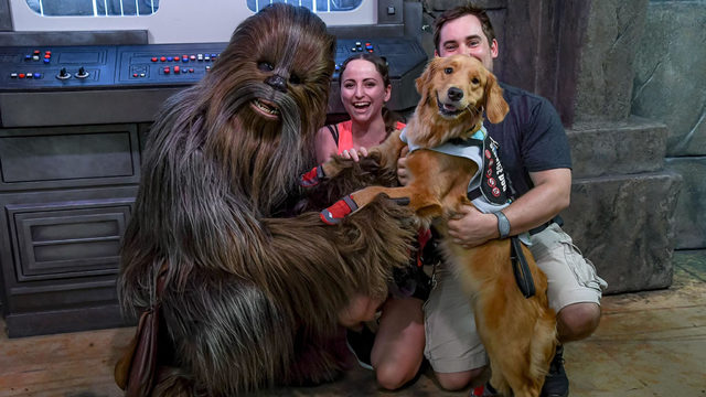 Service dogs meets Chewbacca
