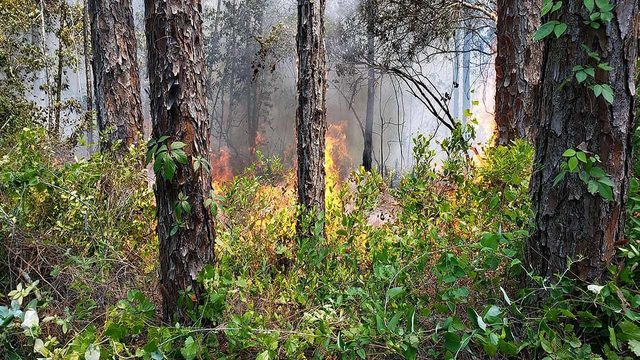 Crews battle brush fire in Marion County