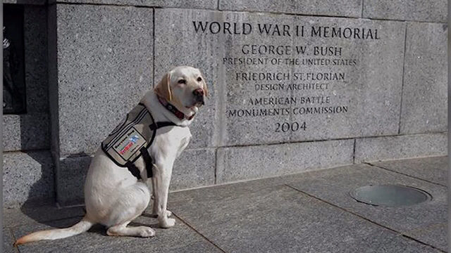 Sully the service dog pays tribute to George H.W. Bush on Memorial Day