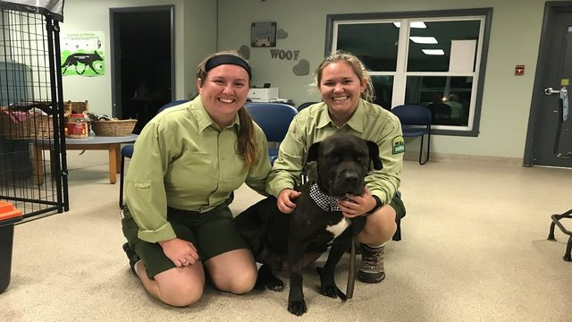 Disney cast members adopt dog that was shot in the face