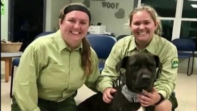 Dog that was shot in the face gets adopted
