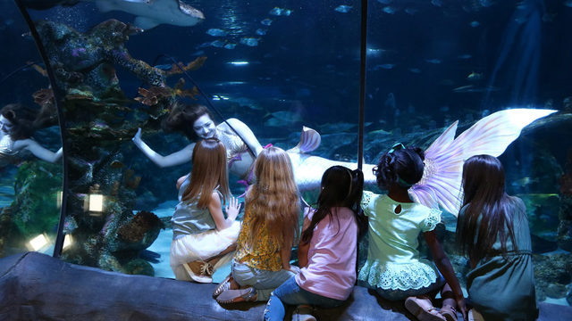 Mermaids back at Sea Life Orlando Aquarium in June