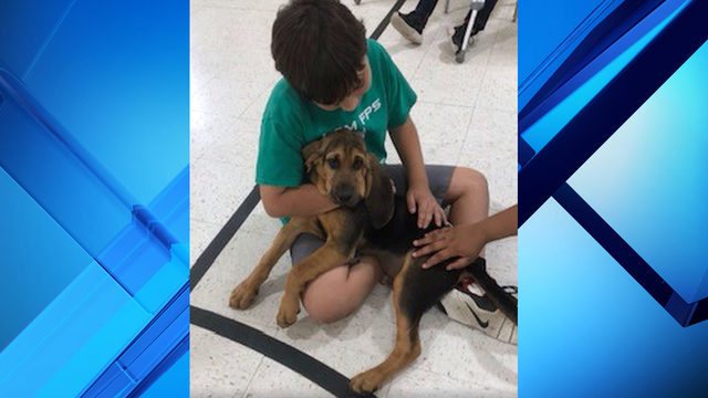 Flagler County K-9 gets social during elementary school outing
