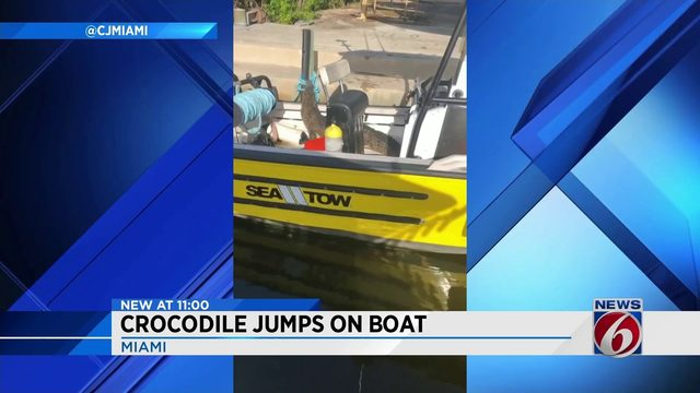 Crocodile makes itself at home on boat in Miami