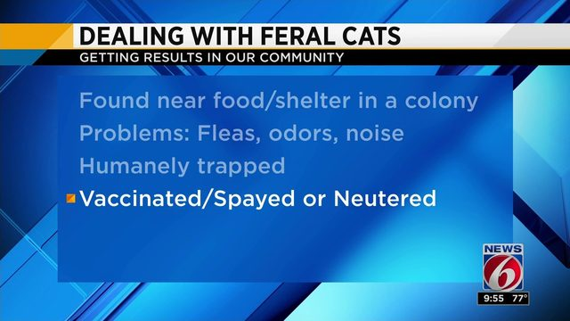 What should you do if feral cats are roaming your neighborhood?