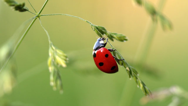 Swarm of ladybugs surfaces on NWS radar: How rare is something like this?