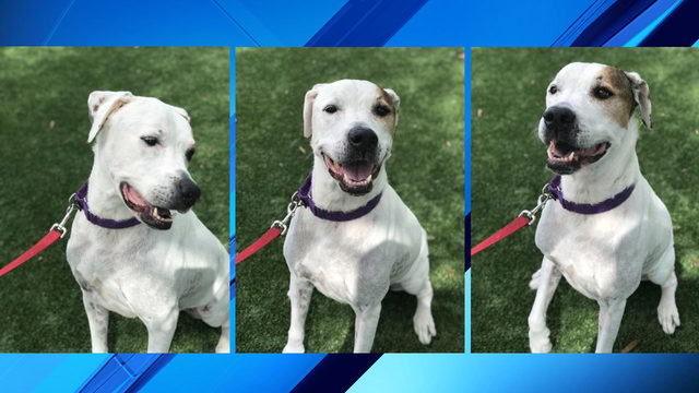 Take me home Tuesday: Give Monty best birthday present, a forever home