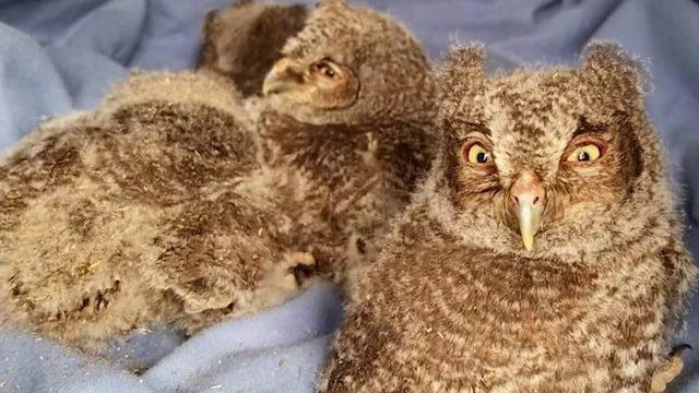 Melbourne wildlife nonprofit needs donations