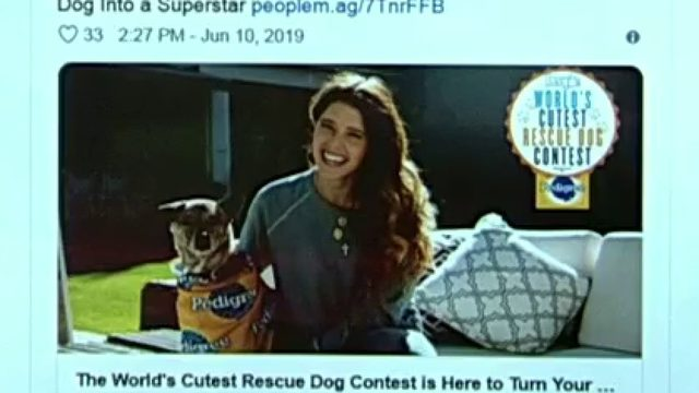 How to enter contest for cutest rescue pup