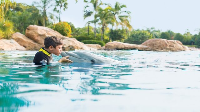 Here's how Florida residents can save 30% at Discovery Cove