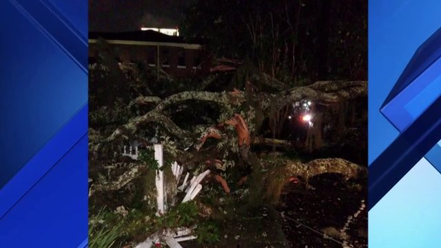 Tree takes out power lines in downtown Orlando