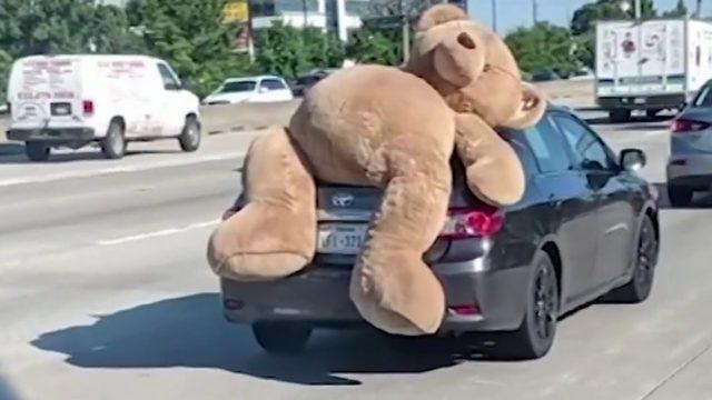 Video: Giant Teddy Bear takes ride on car