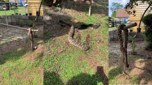 Father and son find themselves within feet of rattlesnake
