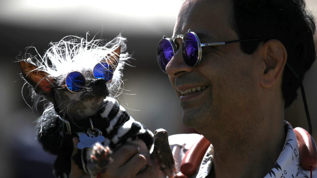 These 9 photos from the World's Ugliest Dog Contest will make you crack a smile