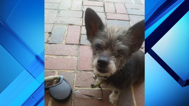 Orlando family searches for person who killed, burned dog
