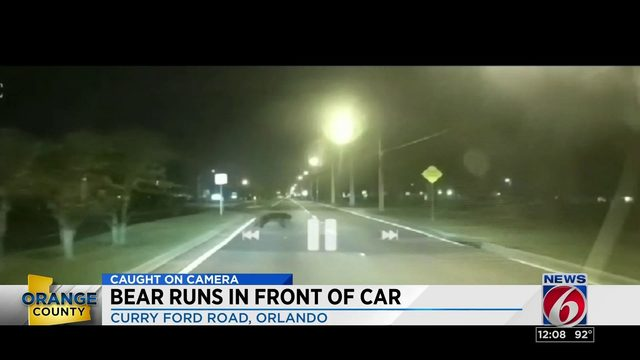 Bear caught on camera running across busy Orlando road