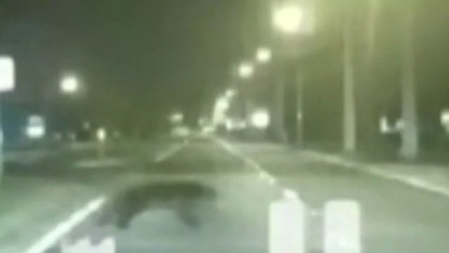 Video shows bear darting in front of car in Orlando