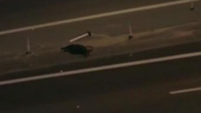 4 times in 11 days: Bear struck, killed on I-4 in Central Florida