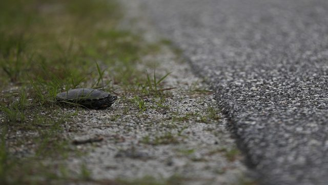 Stopping for turtle results in crash on Florida road