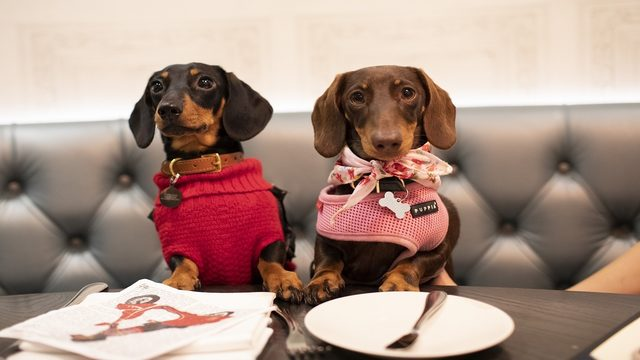 Dog-friendly dining: Bring your pup to these Orlando-area restaurants