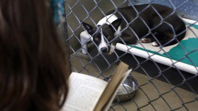 Brevard inmates to cuddle shelter dogs during fireworks celebrations