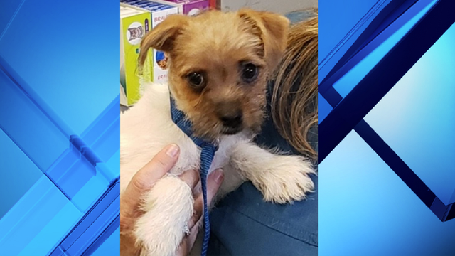 Surviving puppy recovering after being left in hot car