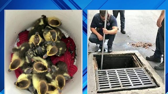 Good news: lucky duck rescue and friendly first responders