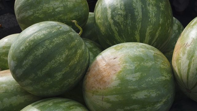 Florida produces more watermelon than any other state