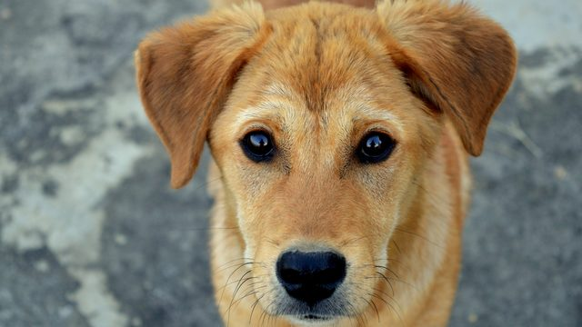 Popular no-kill sanctuary rolls out hotel with pets in mind -- and you…