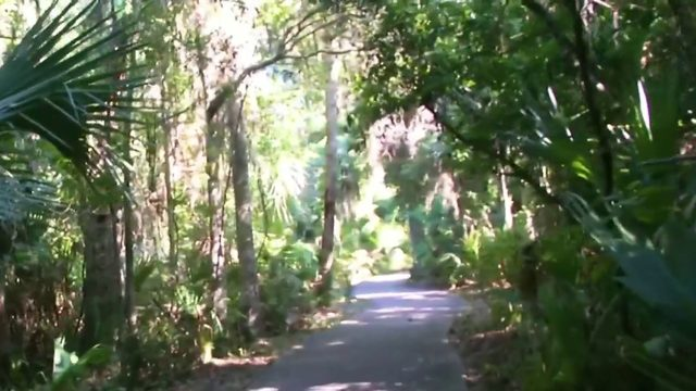 Enchanted Forest helps preserves natural habitats