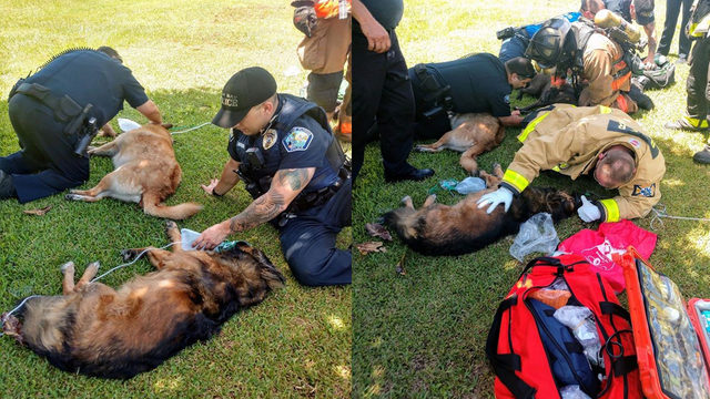 Firefighters rescue man, 4 dogs from house fire in northwest Palm Bay