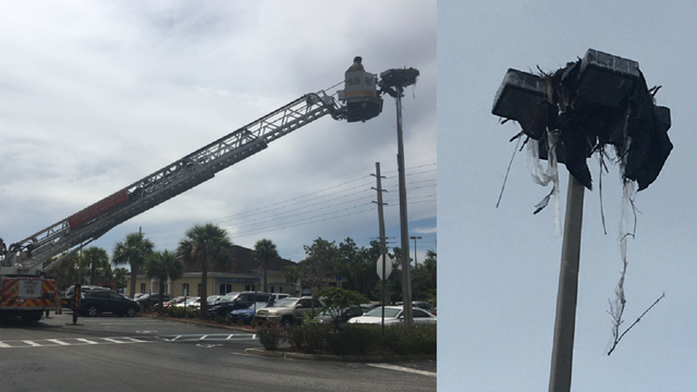 Crews rescue tangled osprey in Brevard County